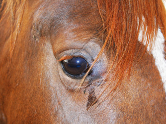 Safety in equine practice