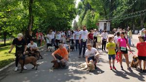 Рекордное количество собак стартовало на забеге DOGS' MILE