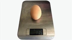Самое большое куриное яйцо