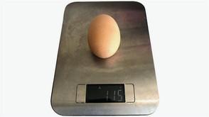 Самое большое куренное яйцо
