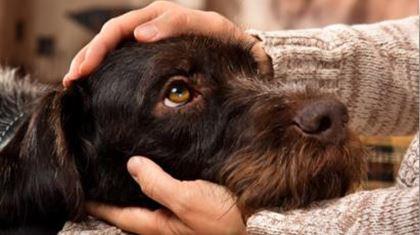 Les raisons de l'anxiété de votre chien