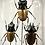 Thumbnail: Globe aux insectes