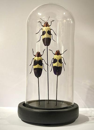 Mini globe aux insectes