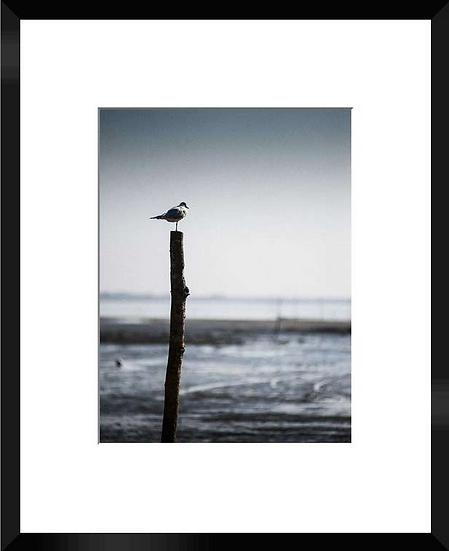"""Photo encadrée """"Le Bassin"""" 40x50"""