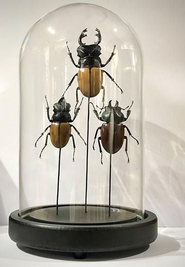 Globe aux insectes