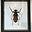 Thumbnail: Boite insecte