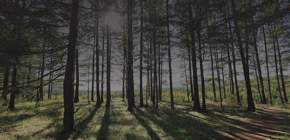 forest-02-cc.jpg