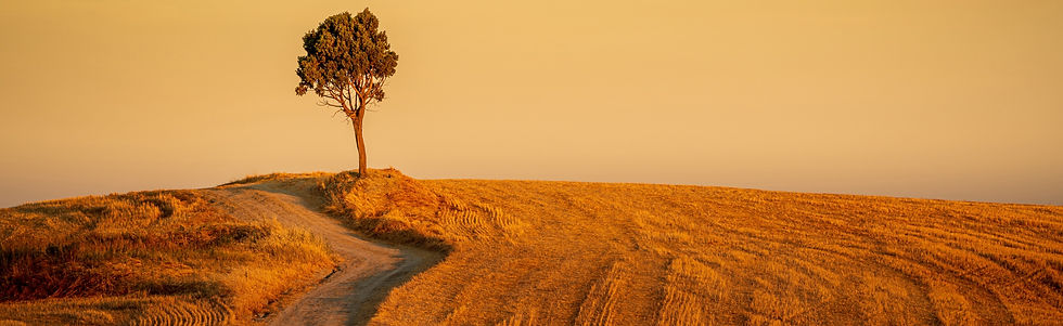 beautiful-shot-path-hills-isolated-tree-