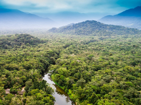 Challenging deforestation with impact investment