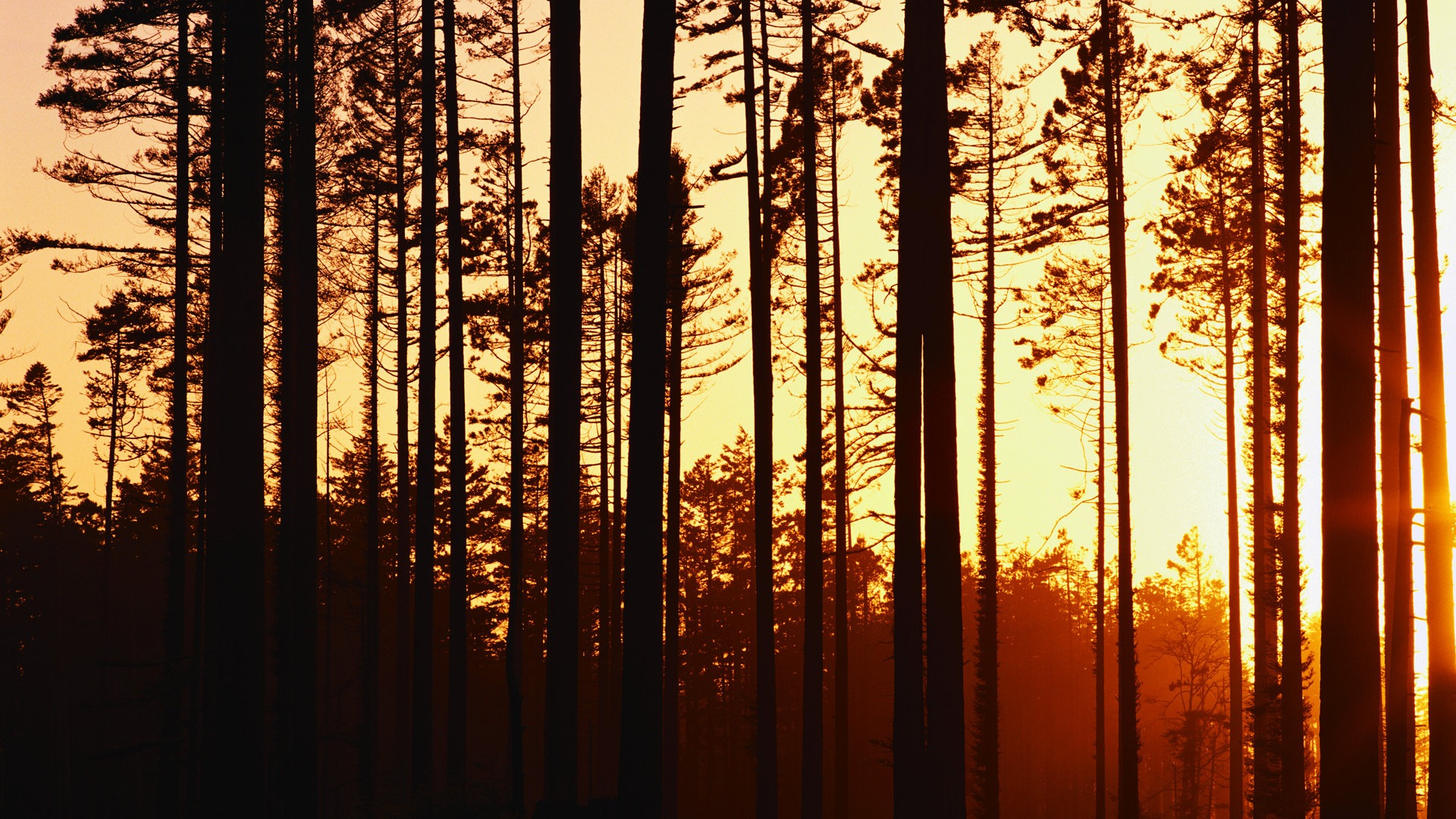-woods-sunset-wallpaper
