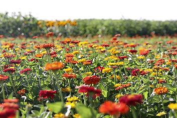 Flowers_020_2000W.jpg