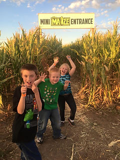 Mini Corn Maze