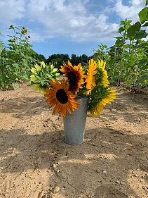 sunflower bucket.jpeg
