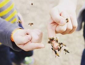 Feed the Bees.jpg