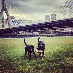 Dog Walking Boston Yuppie Puppy