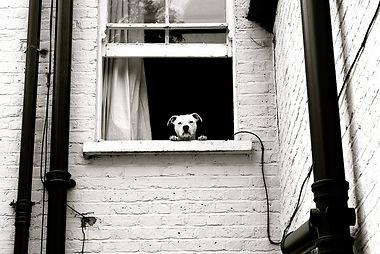 Yuppie Puppy of Boston Dog Walking