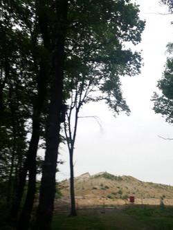 Spicher Wald 2.jpg
