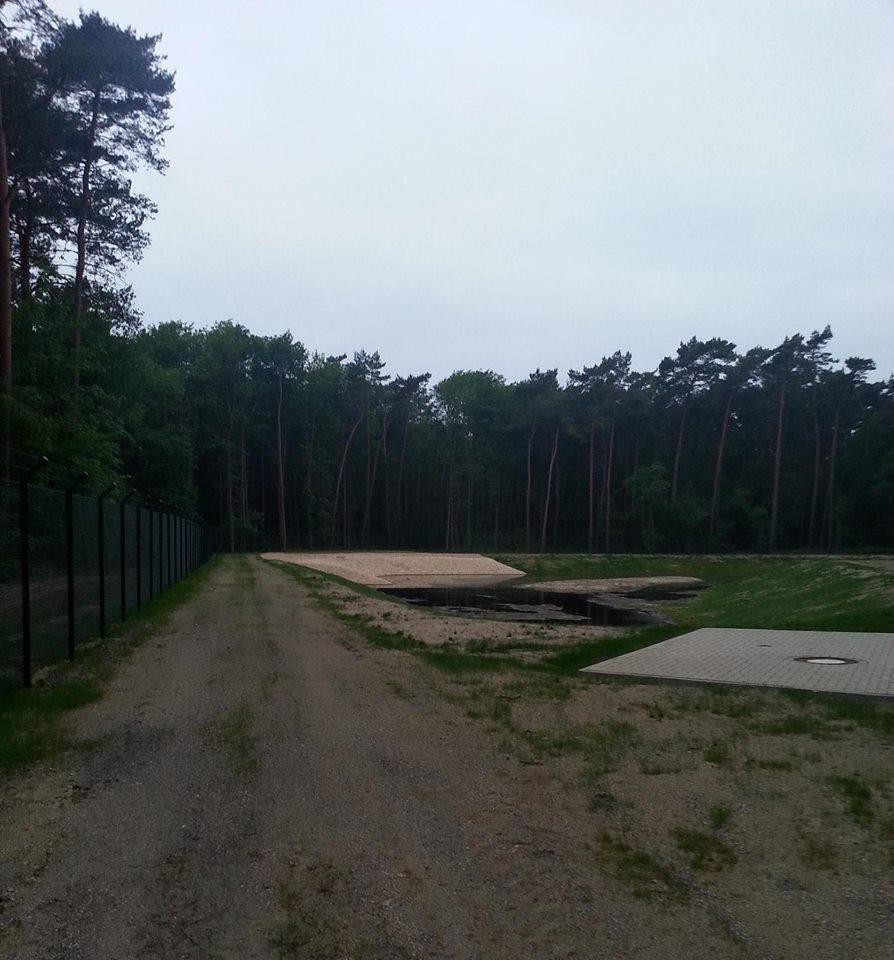 Spicher Wald1.jpg