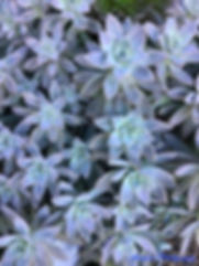 Final Gallery Succulents.jpg