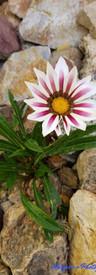 Final Pink Flower.jpg