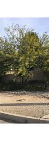Final Before Misquite Tree.jpg