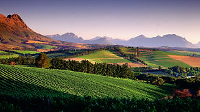south-africa-vineyards.jpg