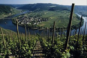 Moselle-5.jpg