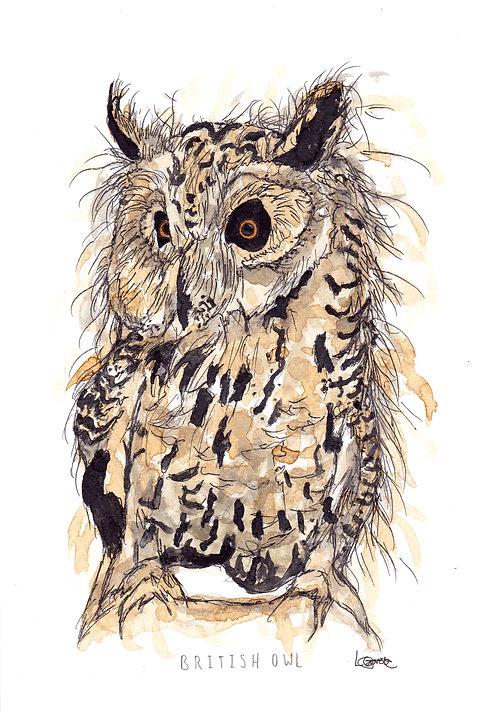 British Owl Greetings Card