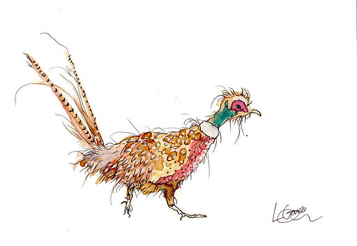 Colourful Pheasant.jpg