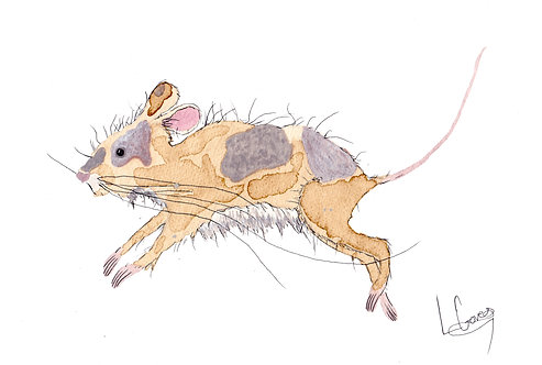 Running Field Mouse