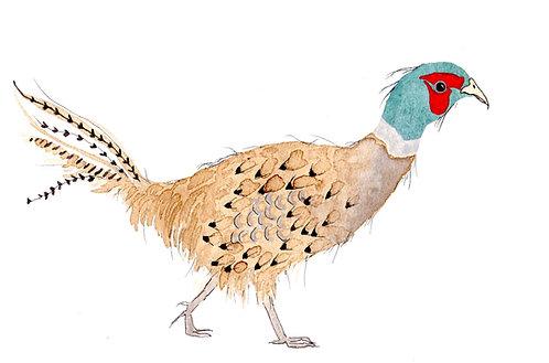 Blue Head Pheasant