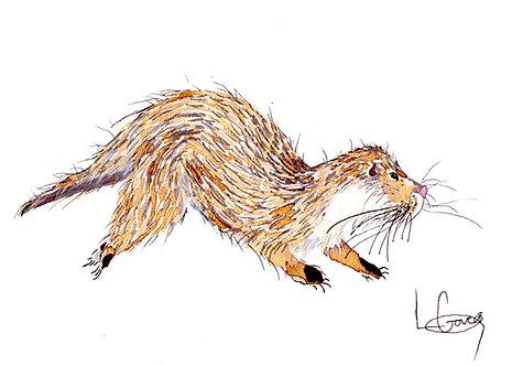 Wild Otter Print