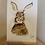 Thumbnail: Coffee stain Bunny