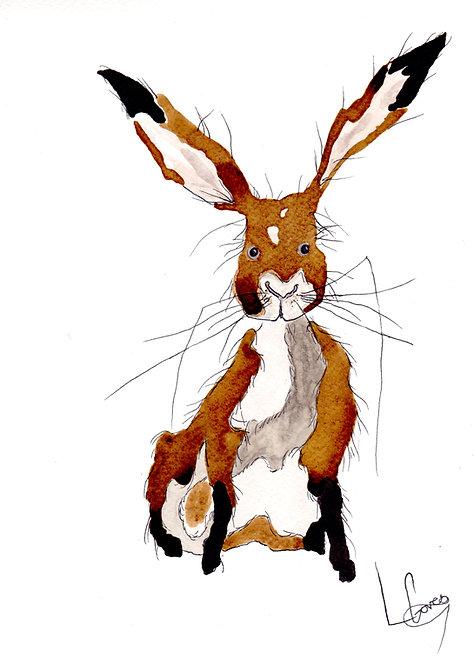 Coffee Hare