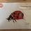 Thumbnail: Lady Bug Original A4 Size Painting