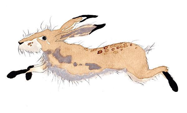 Running Hare 2.jpg