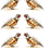 Thumbnail: Wandering Pheasant Cotton Tea Towel