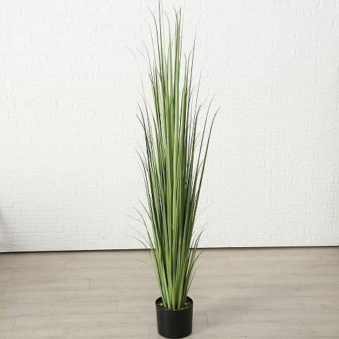 Topfpflanze Siri