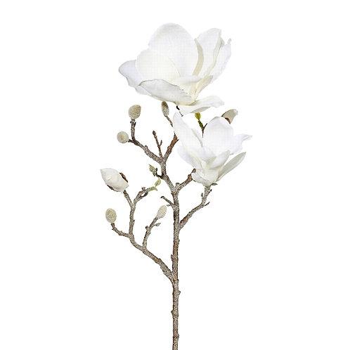 Magnolie gefrostet
