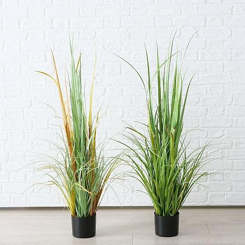 Topfpflanze Bambus