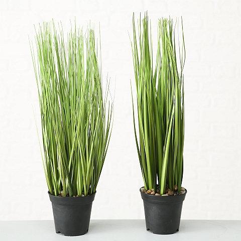 Topfpflanze Gras