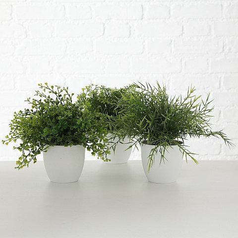 Topfpflanze Gras/Farn 3er Set