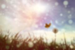 papillon nature.jpg