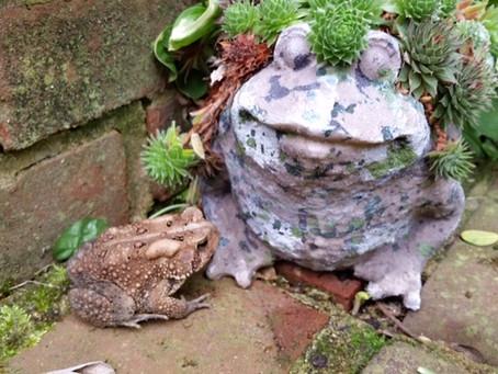 interesting mates around the abode