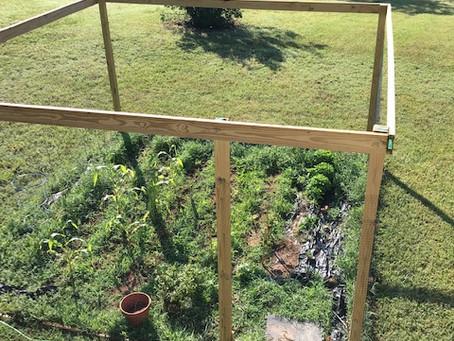 My Defeat Garden