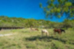 Rockhead Ranch-385.jpg
