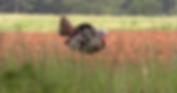 fox creek turkey .png