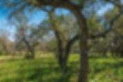 Rockhead Ranch-320.jpg