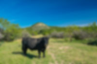Rockhead Ranch-324.jpg