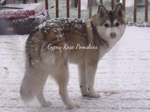 Kanook's beautiful winter coat
